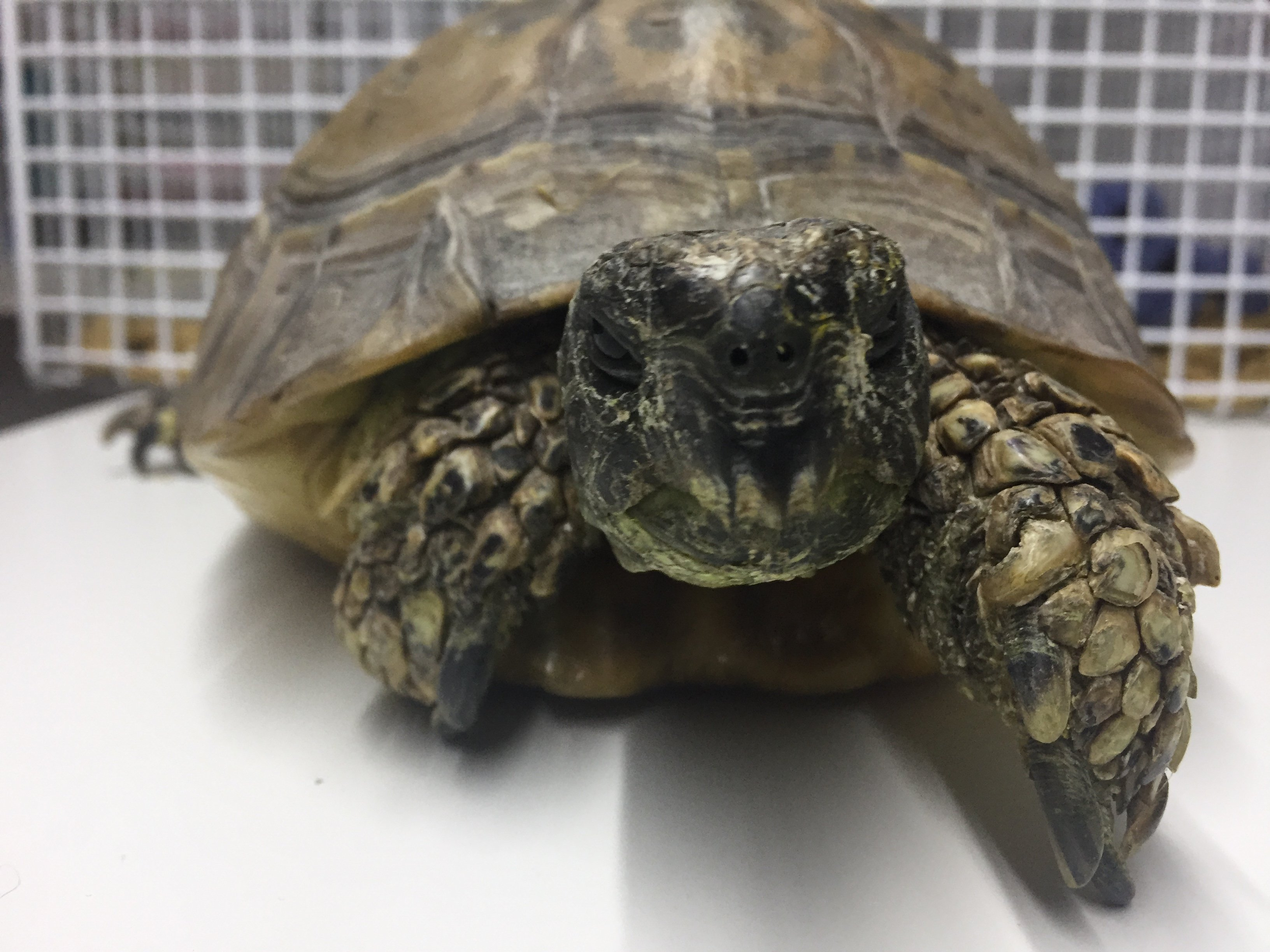 Introducing Bright Side's latest VIPet (along with hibernation tips for Tortoises)