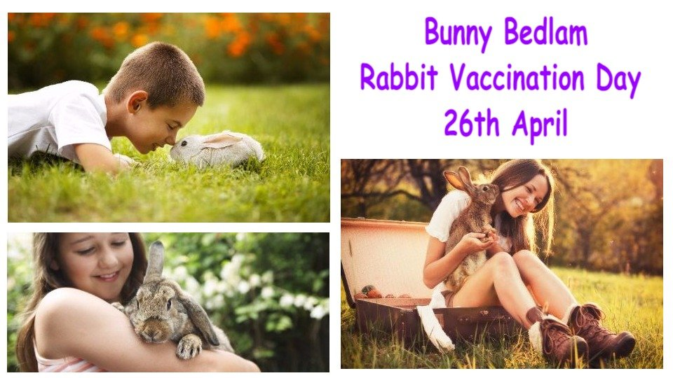 Bunny Bedlam – Rabbit Vaccination Day