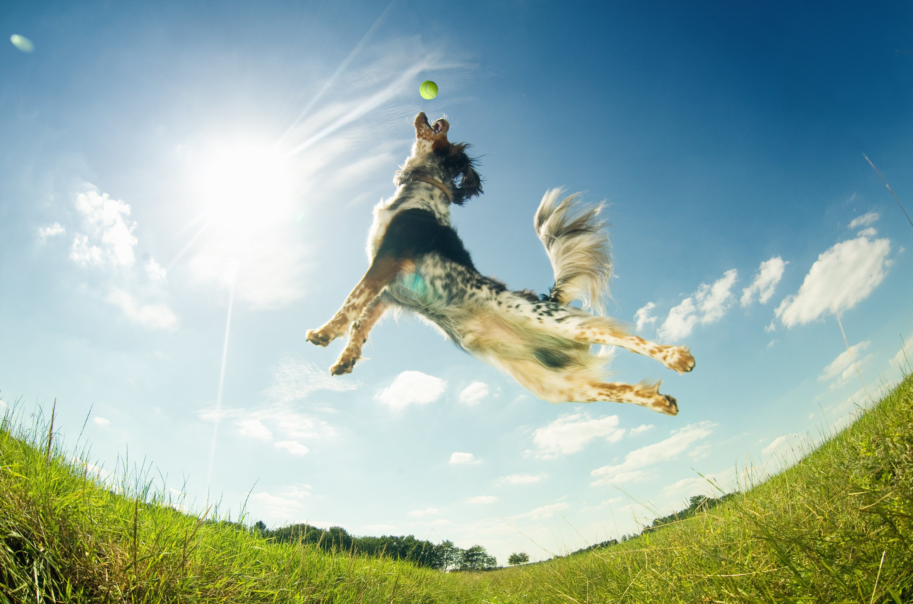 From Flabb to Fit – Help your Fur Babies Live Healthier – Obesity