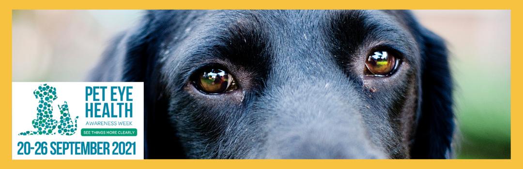 Pet Eye Health Awareness Week 2021