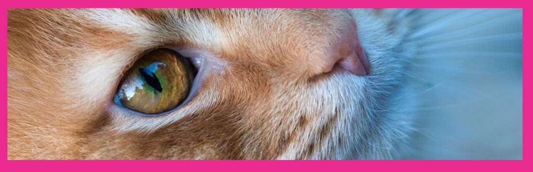 Cat Vaccination Shortage 2021